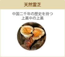 天然霊芝 中国二千年の歴史を持つ上薬中の上薬